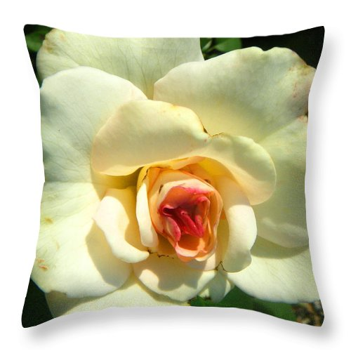 Landscapes Throw Pillow featuring the photograph Wonderland Rose by April Patterson