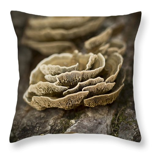 Fungus Throw Pillow featuring the photograph Wood Shrooms by Kim Henderson