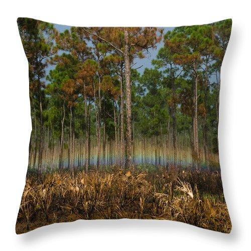 Janathon Dickenson State Parke Throw Pillow featuring the photograph Woodland Rainbow by Robert Swinson