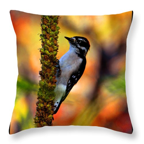 Woodpecker Throw Pillow featuring the photograph Woodpecker On Mullein by Susanne Still