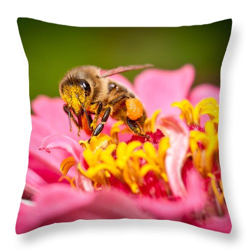 Honey Throw Pillow featuring the photograph Worker Bee by Keith Allen