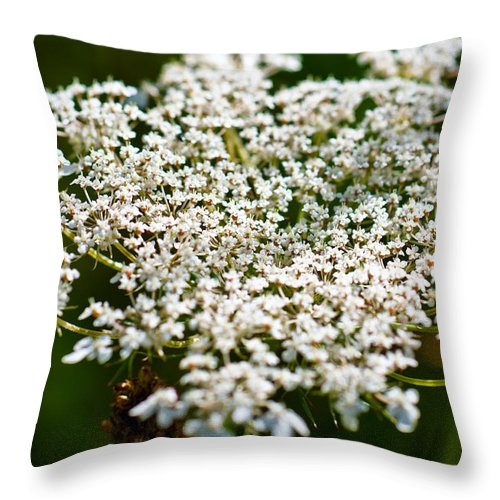 Abstract Throw Pillow featuring the photograph Yarrow Plant Flower Head by U Schade