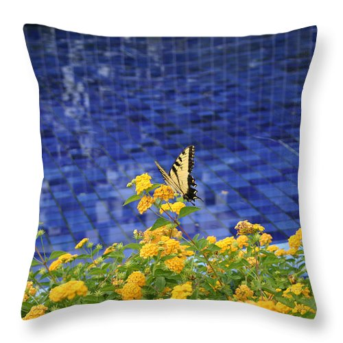 Bug Throw Pillow featuring the photograph Yellow Against Blue by Nina Fosdick