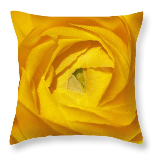 Bronstein Throw Pillow featuring the photograph Yellow Beauty by Sandra Bronstein