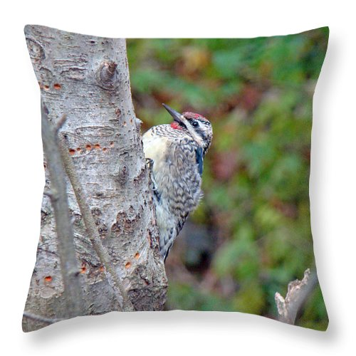 Sapsucker Throw Pillow featuring the photograph Yellow-bellied Sapsucker  Sphyrapicus Varius by Mother Nature