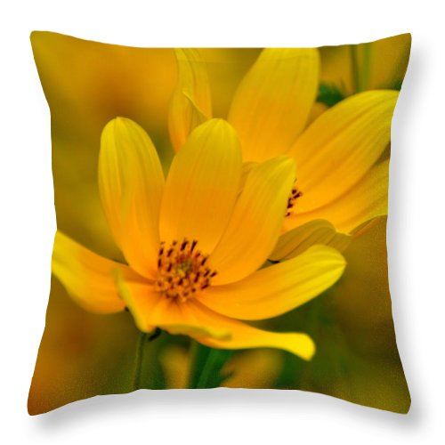 Wild Flower Throw Pillow featuring the photograph Yellow Blaze by Marty Koch