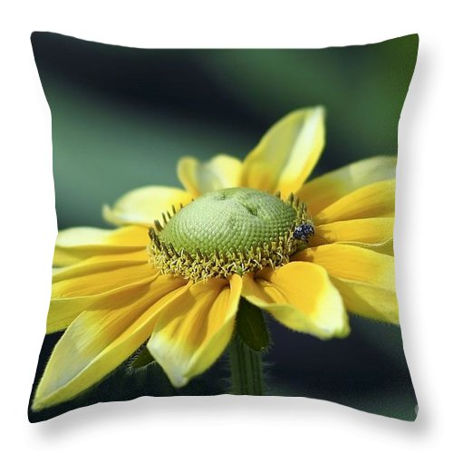 Flower Throw Pillow featuring the photograph Yellow Daisy by Teresa Zieba