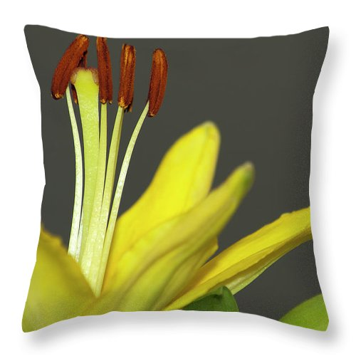 Lily Throw Pillow featuring the photograph Yellow Day Lily by Carolyn Marshall
