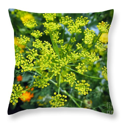 Dill Throw Pillow featuring the photograph Yellow Firework Or Dill In Its Glory by Ausra Huntington nee Paulauskaite