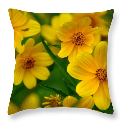 Wildflower Throw Pillow featuring the photograph Yellow Flowers by Marty Koch