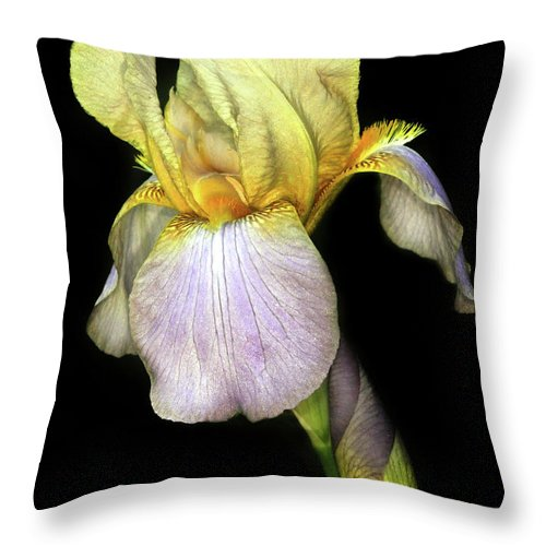 Iris Throw Pillow featuring the photograph Yellow Iris by Dave Mills