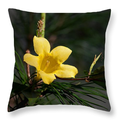 Nature Throw Pillow featuring the photograph Yellow Jessamine by Kenneth Albin