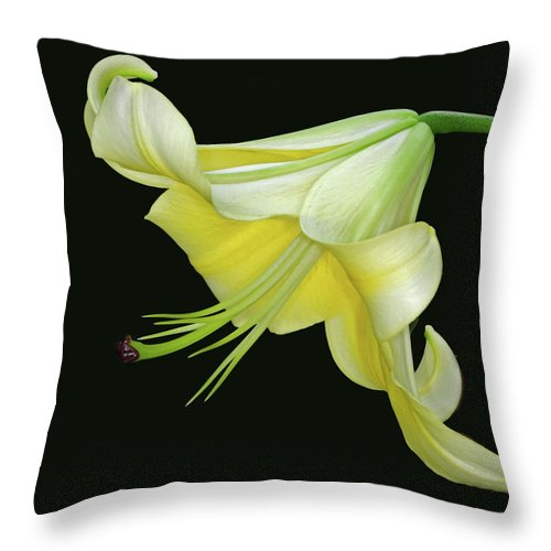 Lily Throw Pillow featuring the photograph Yellow Lily by Dave Mills