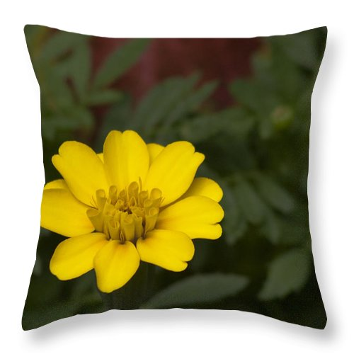 Flower Throw Pillow featuring the photograph Small Yellow Zinnia by Mark Michel