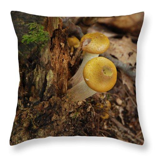 Mushrooms Throw Pillow featuring the photograph Yellow Mushrooms by Grace Grogan