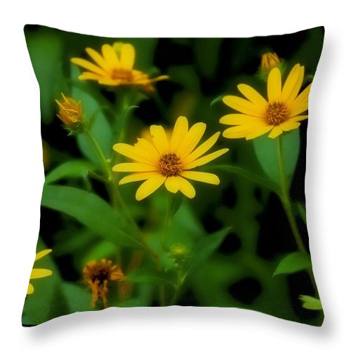 Daisies Throw Pillow featuring the photograph Yellow N Green by Sheri Bartoszek