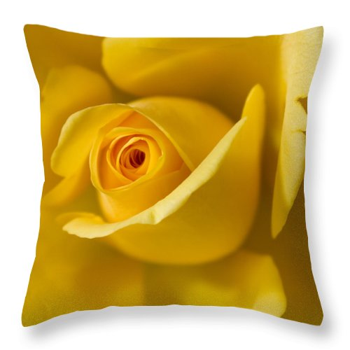 Yellow Rose Throw Pillow featuring the photograph Yellow Rose by Pixie Copley
