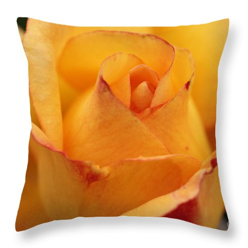 Throw Pillow featuring the photograph Yellow Rose by Diane Greco-Lesser