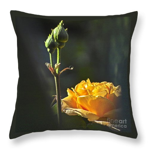 Rose Throw Pillow featuring the photograph Yellow Rose by Heiko Koehrer-Wagner