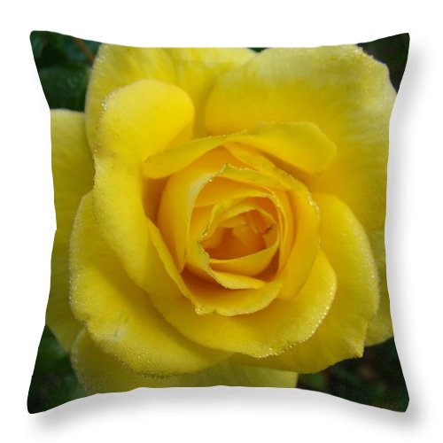 Rose Throw Pillow featuring the photograph Yellow Rose Of Texas by Michael MacGregor