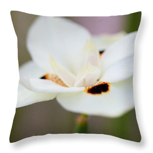 Yellow Flower Throw Pillow featuring the photograph Yellow Wild Iris by Brooke Roby