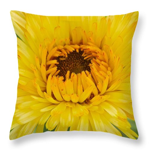 Annual Throw Pillow featuring the photograph Yellow Zinnia 9494 4286 by Michael Peychich