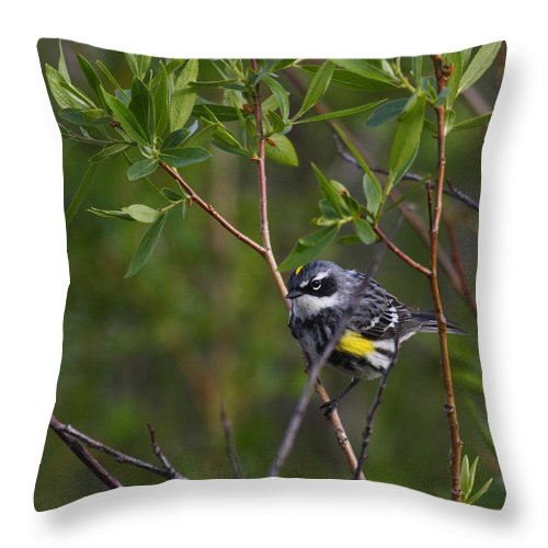 Alaska Throw Pillow featuring the photograph Yellowrumped Warbler by Doug Lloyd