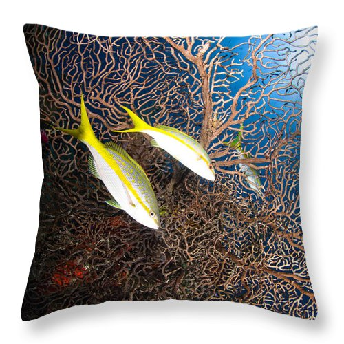 Sea Life Throw Pillow featuring the photograph Yellowtail Snappers And Sea Fan, Belize by Todd Winner