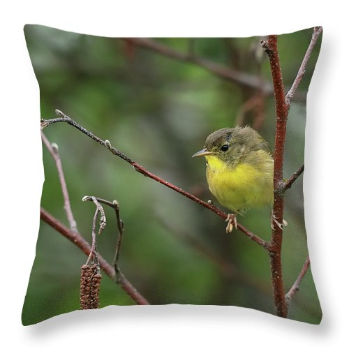 Nature Throw Pillow featuring the photograph Yellowthroated Warbler by Susan Capuano