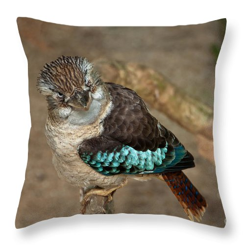 Kookaburra Throw Pillow featuring the photograph You Lookin' At Me by Bob and Nancy Kendrick