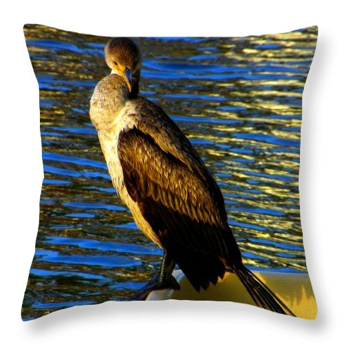 Cormorants Throw Pillow featuring the photograph You Looking At Me by Henry Murray