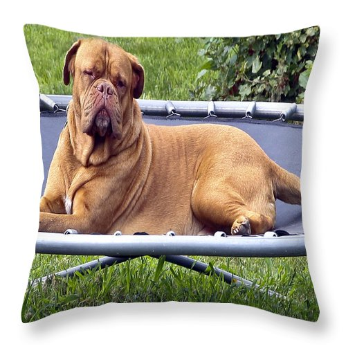 Very Large Dog Throw Pillow featuring the photograph You Want To Do What by Burney Lieberman