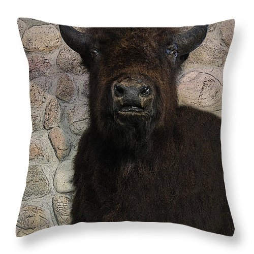 Al Bourassa Throw Pillow featuring the photograph Young Bison by Al Bourassa