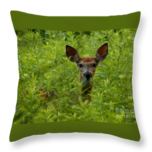 Young Fawn Playing Peek A Boo Throw Pillow featuring the photograph Young Fawn Playing Peek A Boo by Inspired Nature Photography Fine Art Photography