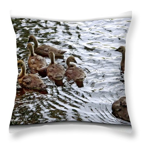 2d Throw Pillow featuring the photograph Young Geese by Brian Wallace