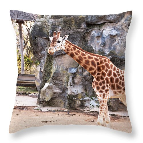 Photograph Throw Pillow featuring the photograph Young Giraffe by Bob and Nancy Kendrick