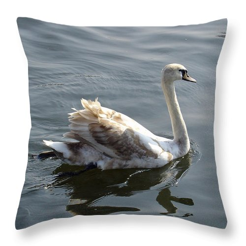 Europe Throw Pillow featuring the photograph Young Swan by Rod Johnson
