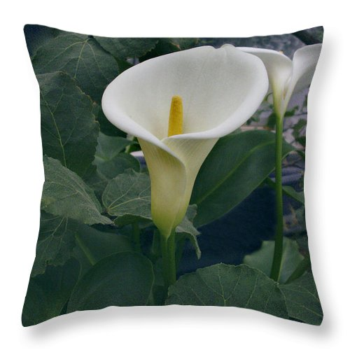Zantedeshia Aethiopica Throw Pillow featuring the photograph Zantedeshia Aethiopica African Flower by Nancy Griswold