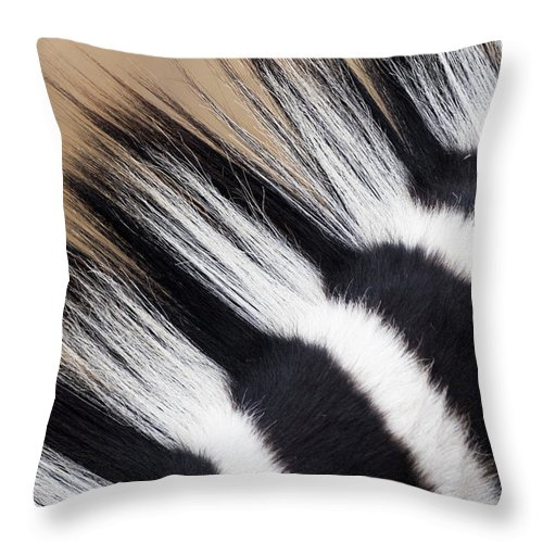 Fn Throw Pillow featuring the photograph Zebra Equus Quagga Mane, Khama Rhino by Vincent Grafhorst