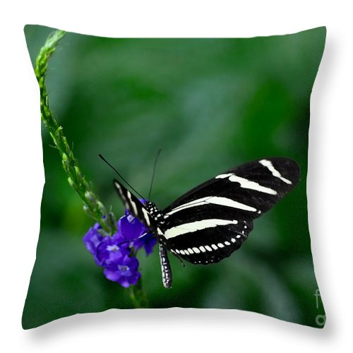 Butterfly Throw Pillow featuring the photograph Zebra Longwing by Elaine Manley