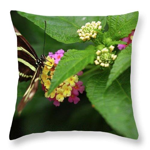 Butterfly Throw Pillow featuring the photograph Zebra Longwing by Rick Berk