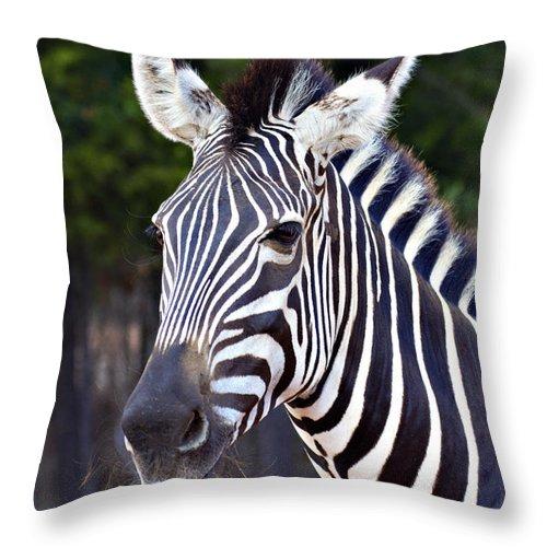 Zebra Throw Pillow featuring the photograph Zebra Symmetry by Douglas Barnard