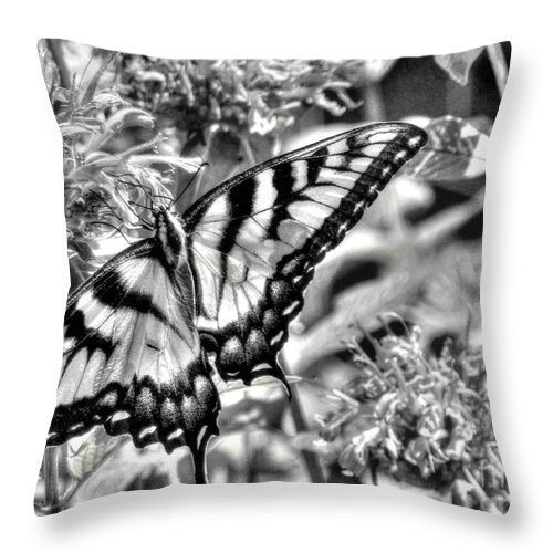 Butterfly Throw Pillow featuring the photograph Zebra Wings by Michael Garyet