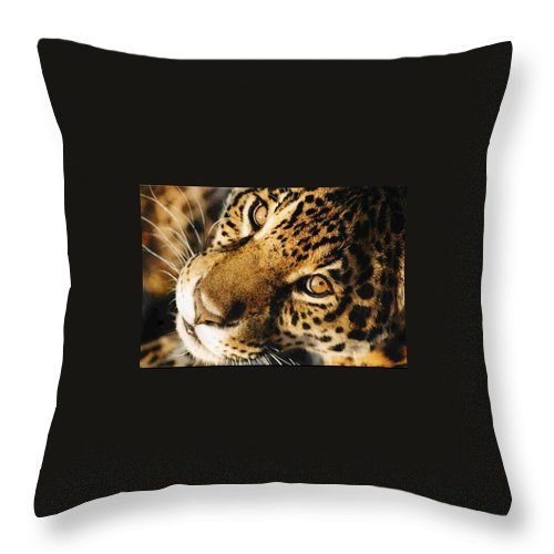 Jaguar Face. Throw Pillow featuring the photograph       Waiting by Leandro Sebastian  Marquez
