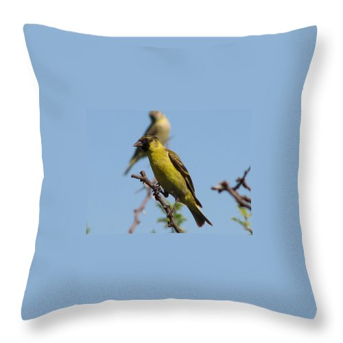 Black Head Bird Throw Pillow featuring the photograph      Look Out by Leandro Sebastian  Marquez