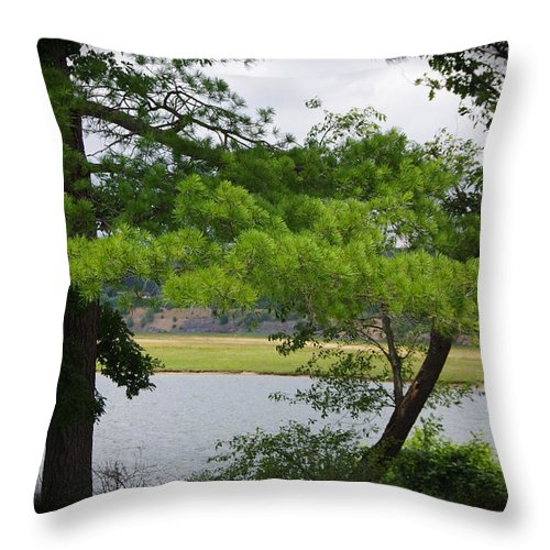 Landscape Throw Pillow featuring the photograph Adaptability by Adam Sobas