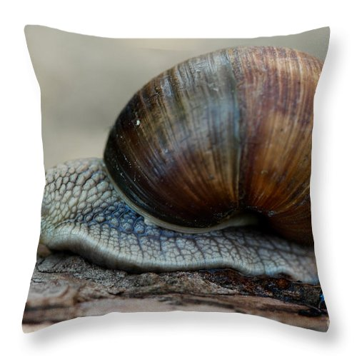 Escargot Burgundy Snail Throw Pillow featuring the photograph Burgundy Snail by Brothers Beerens