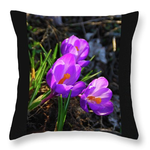 Flowers Throw Pillow featuring the photograph Crocus 0083 by Guy Whiteley