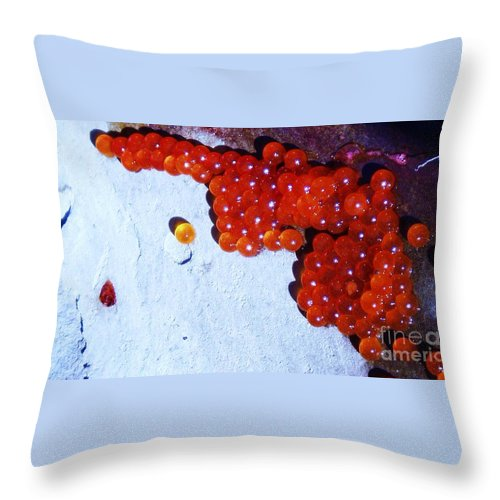 Photograph Fish Egg Lake Water Rock Throw Pillow featuring the photograph Don't Kill Me. by Seon-Jeong Kim