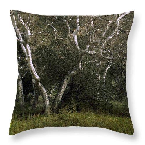 Tree Throw Pillow featuring the photograph Dv Creek Trees by Karen W Meyer